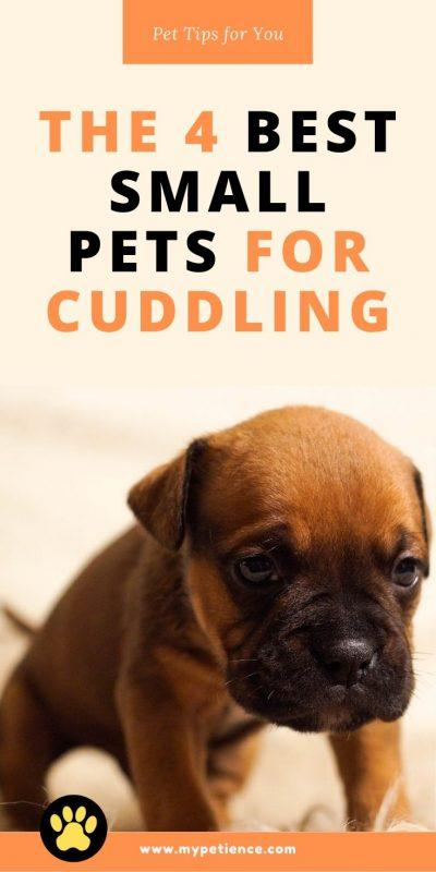 Check this pet guide to find out which small animals are best as adorable pets to cuddle.
