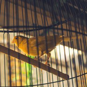 The Top Canary Cage Tips - Choosing a Canary Cage Easily