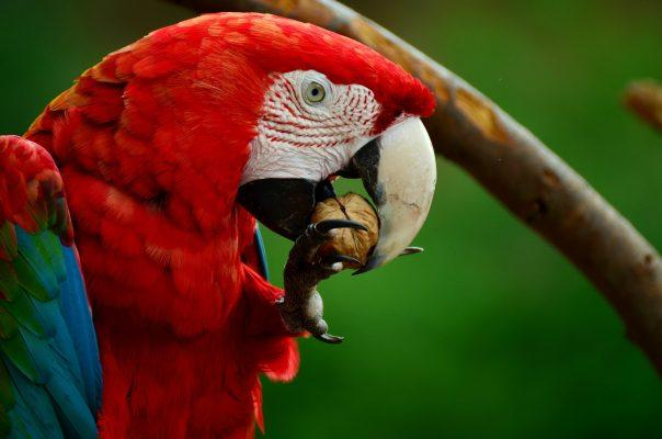 Where do Parrots Live The Habits of Parrots