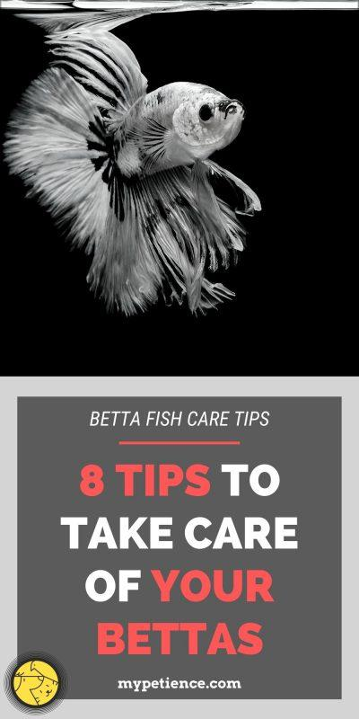 betta care - how to take care of betta fish as a beginner?