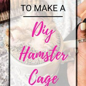 Check out this article to provide you with easy to follow procedures in building a DIY hamster cage for your pet hamster.