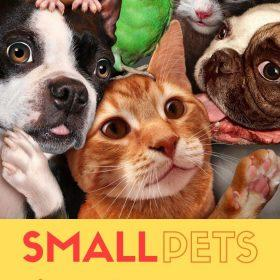 Before selecting the best small pets for apartments, a pet lover should do research, especially choosing the first pet.