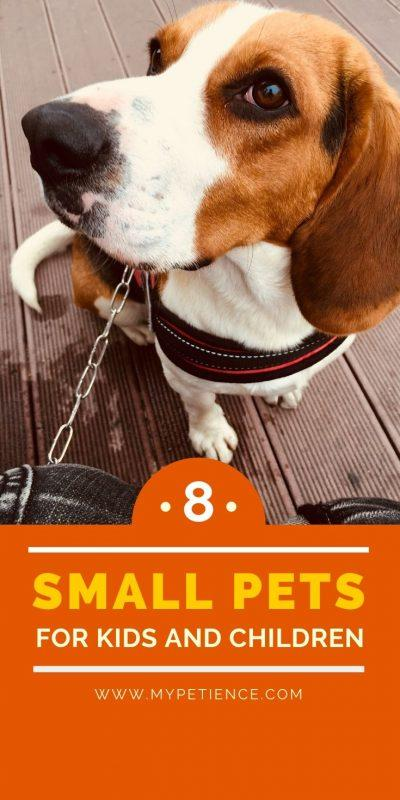 Having small pets for kids is important for them to understand how to value other living things