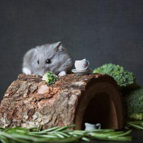 Each Behavior of Hamsters That You Must Know