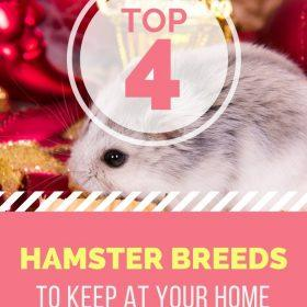 Choose the best hamster breeds to keep in your house.