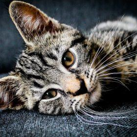 Do Cat Whiskers Grow Back? - Cat and Kitten Care