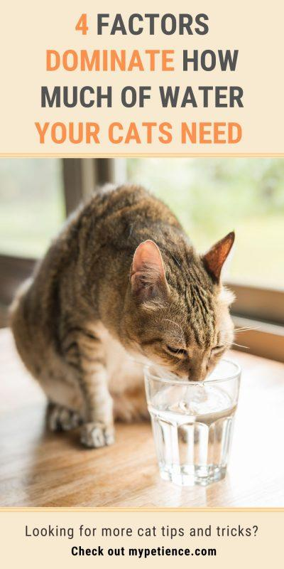How Long Can a Cat Go Without Water and Food? : Mypetience