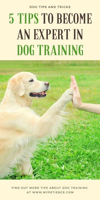 Dog training tricks and how to train a dog are crucial for your dog to become obedient to your order.