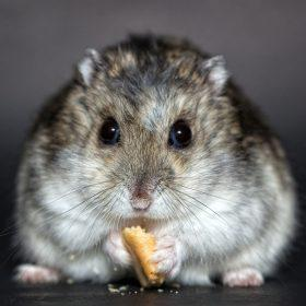 Best Hamster Food Guides - What Can Hamsters Eat?
