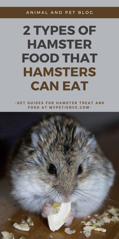 find out the best hamster food and what can hamsters eat here.