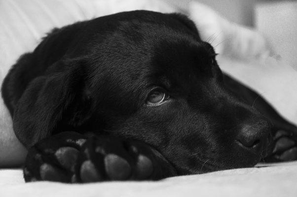 How long can a dog go without food, How long can a dog go without eating, Appetite stimulant for dogs