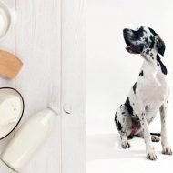 Is Yogurt Good for Dogs? - Dog Health Tips
