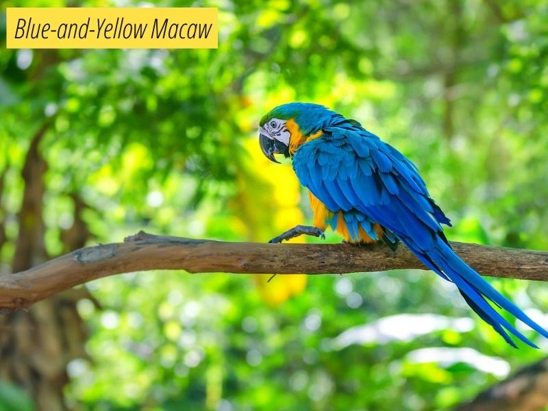 Macaws Lifespan How Long Do Macaws Live Mypetience,Smoked Salmon Bagel